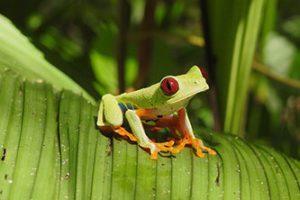 La conservazione della biodiversità: singolare esperienza di studio e ricerca in Scienze Naturali nella Costa Rica
