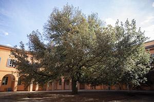 Il 5 per mille per fare rivivere la memoria architettonica delle nostre città e dell'ateneo: il caso del complesso San Paolo e la Biblioteca giuridica